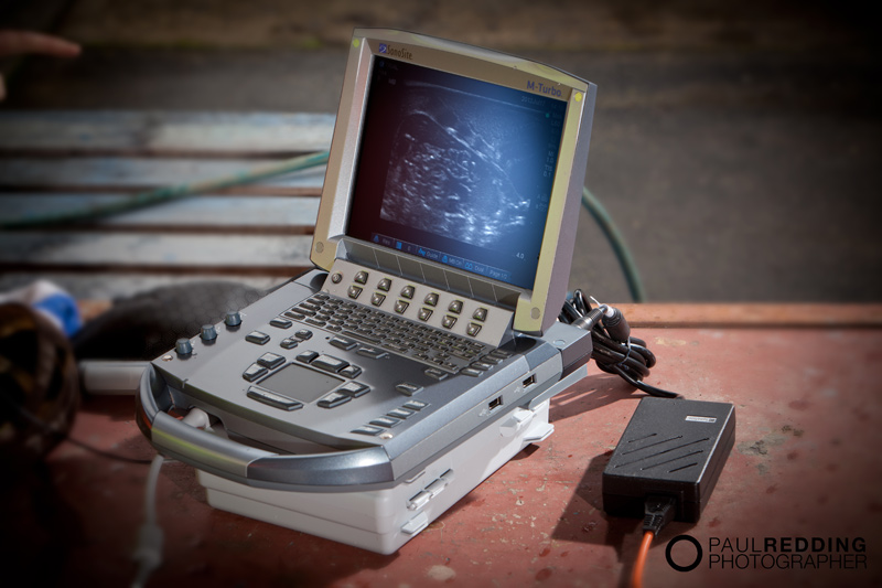 BCF Ultrasound Australasia – Veterinary Equipment photography